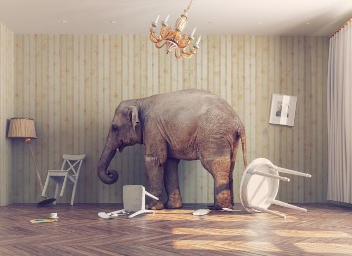 Elephant In the Room ECM-489096-edited.jpg