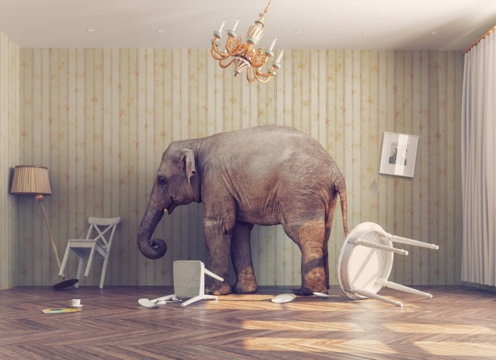 Elephant In the Room ECM-489096-edited.jpg